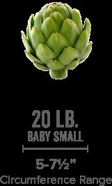 artichoke-baby-small