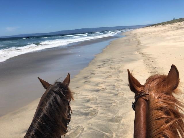 Beach Ride