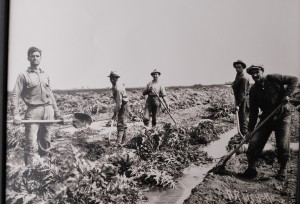 Castroville_Artichoke Harvesters from 1930s