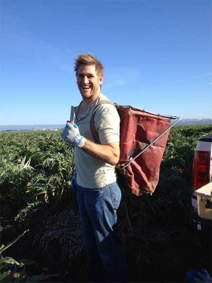 Chef Curtis Stone harvesting Ocean Mist Farms heirloom Artichokes in Castroville Feb 2014