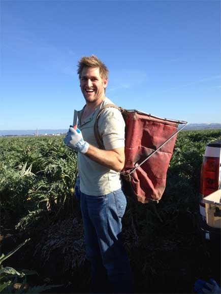Chef Curtis Stone harvesting Ocean Mist Farms heirloom Artichokes in Castroville Feb 2014