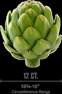 large artichoke