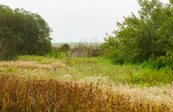 wetland-836017-edited-871044-edited