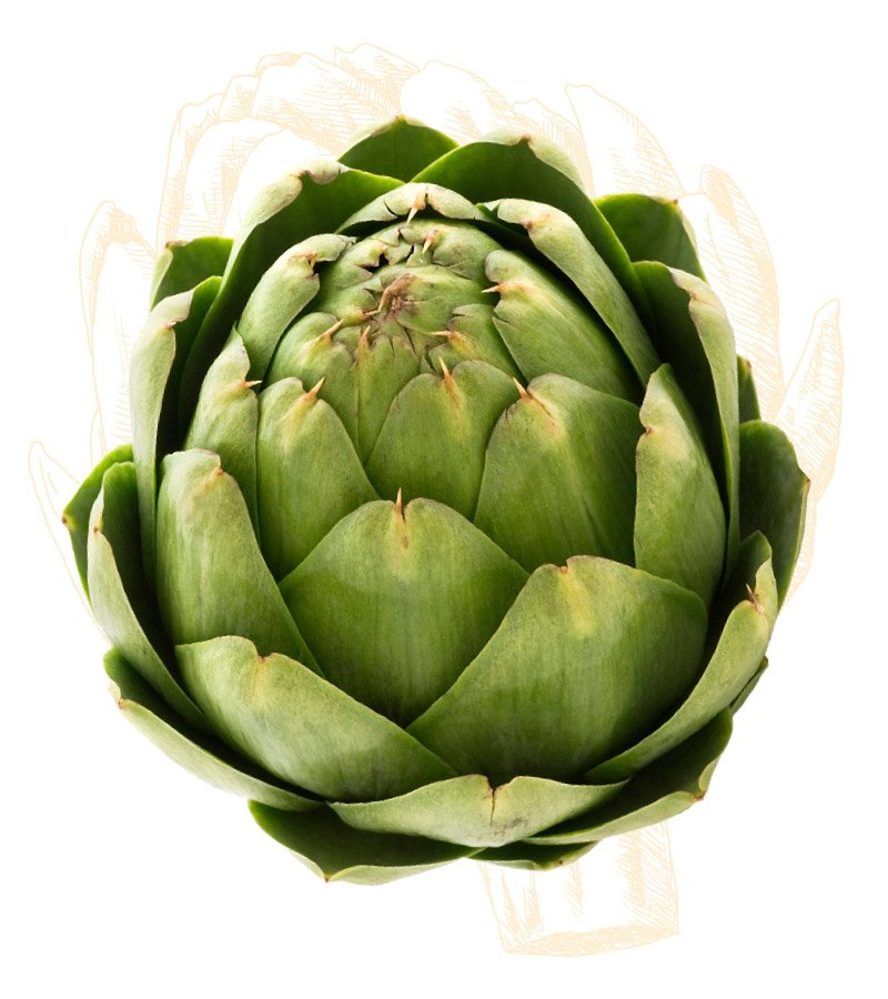 How to Select and Store Artichokes