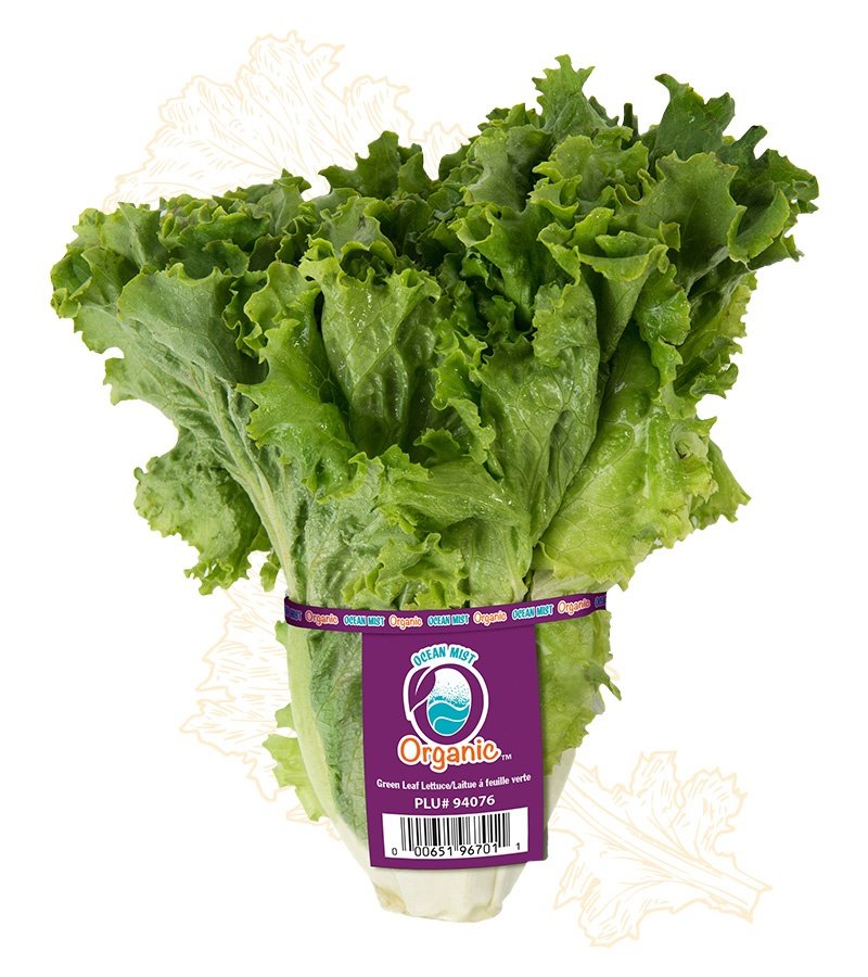 leaf lettuce