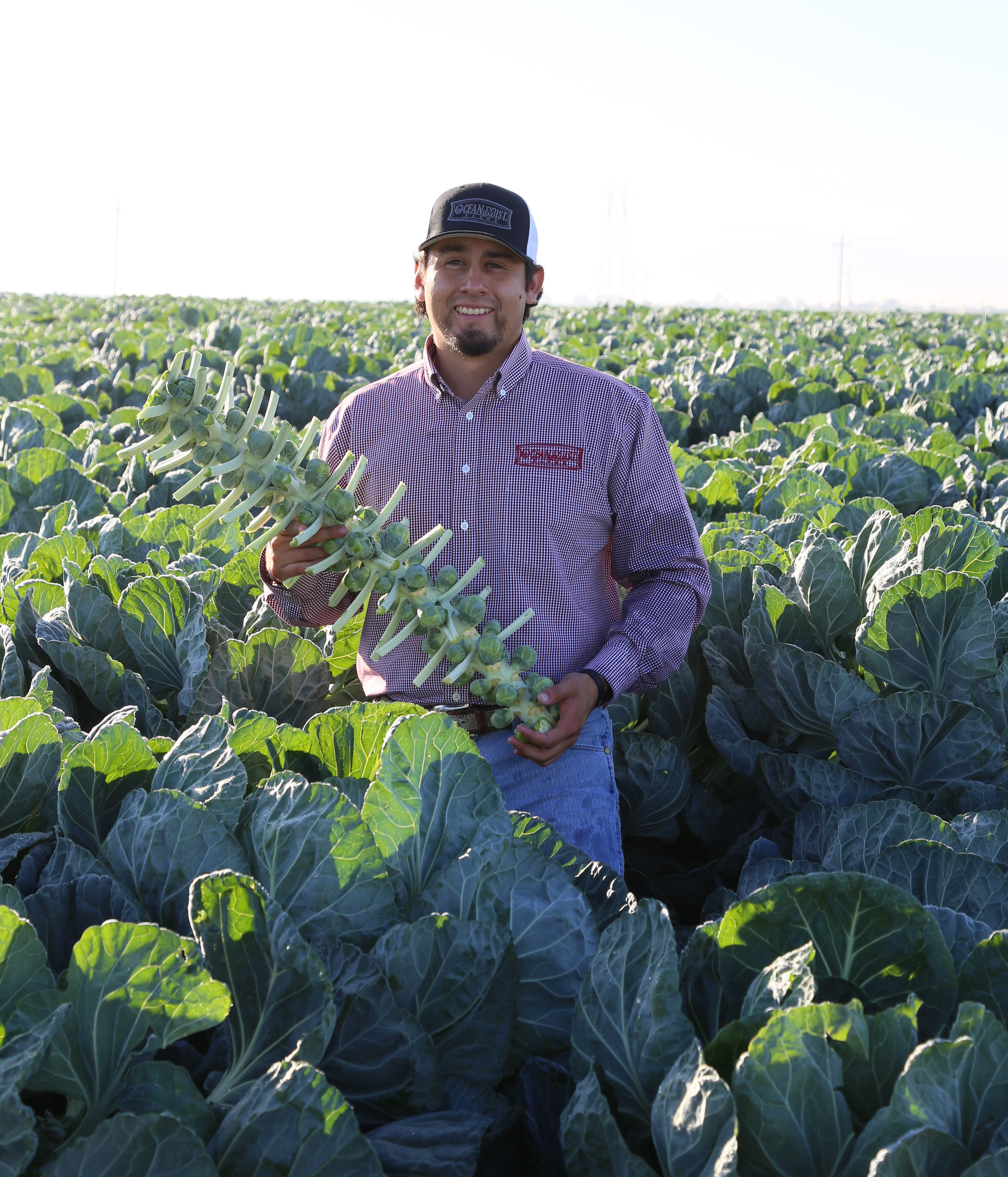 Jacob Perez- Harvest Commodity Manager-1