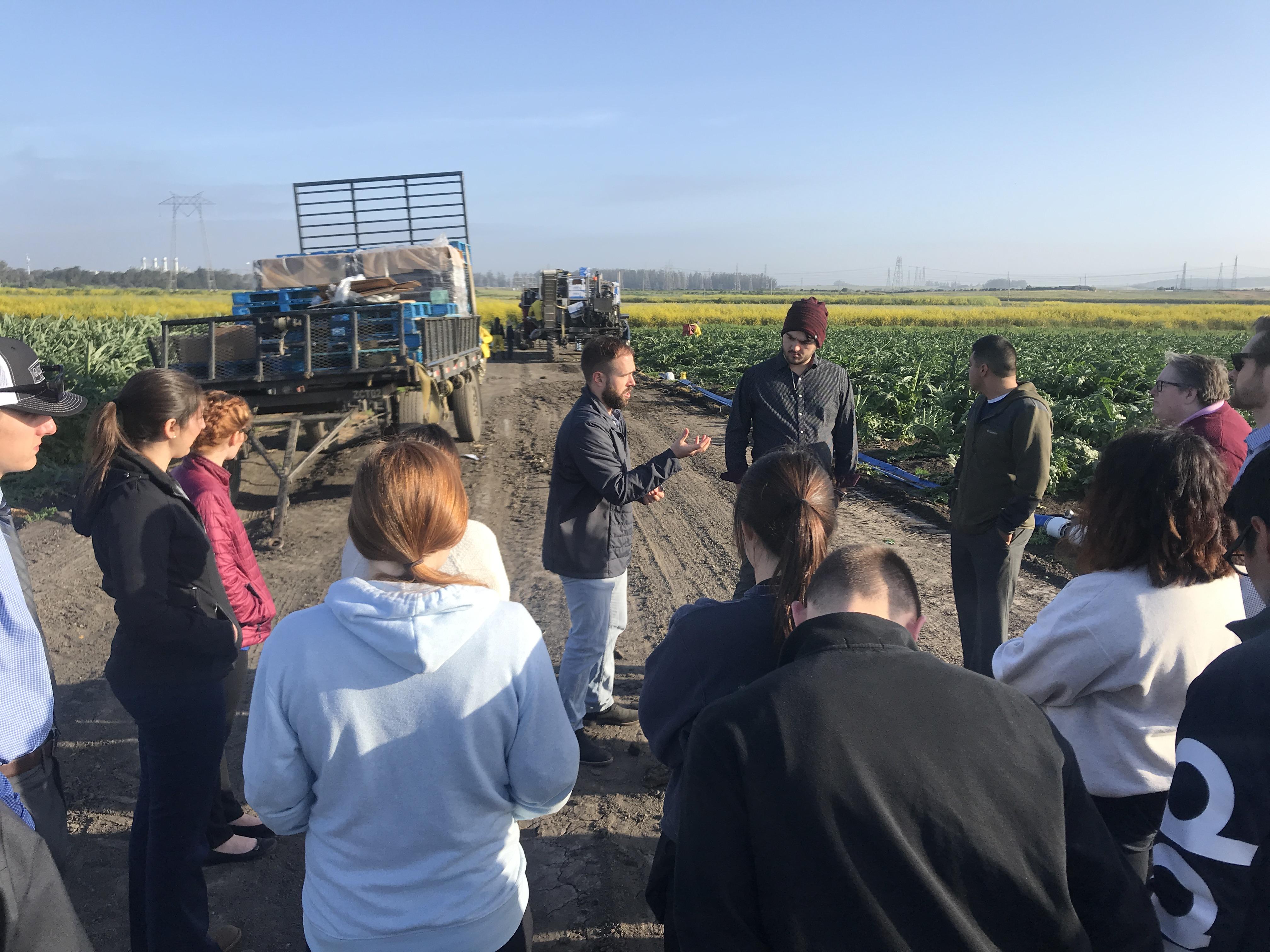 Learning in the Artichoke Field