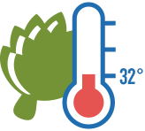 artichoke and thermometer